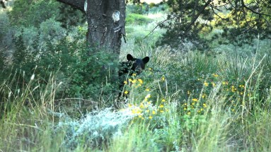 Yep! Spotted a bear! Never ever thought we'd see a bear in the state of Texas! But there are bears, mountain lions, and all kinds of awesome (and dangerous) creatures in the park....