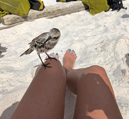 And these mockingbirds are found only on this island. No other place on earth. There are other mockingbirds on the other islands, and they are also endemic and unique to those specific islands. They are actually what got Charles Darwin thinking about evolution during his time here.