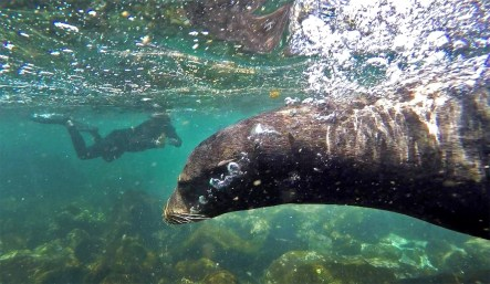 Snorkeling with sea lions is truly one of life's greatest thrills. And they are everywhere in the Galapagos! So cool!