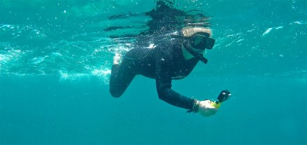 But there's so much more to be found in the waters of the Galapagos, including...