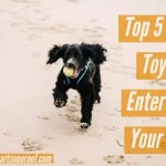 Top 5 Dog Toys to Entertain your Dog – How to stop dogs destroying your home