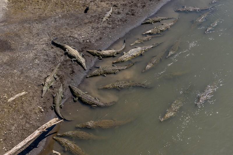 rio tarcoles bro