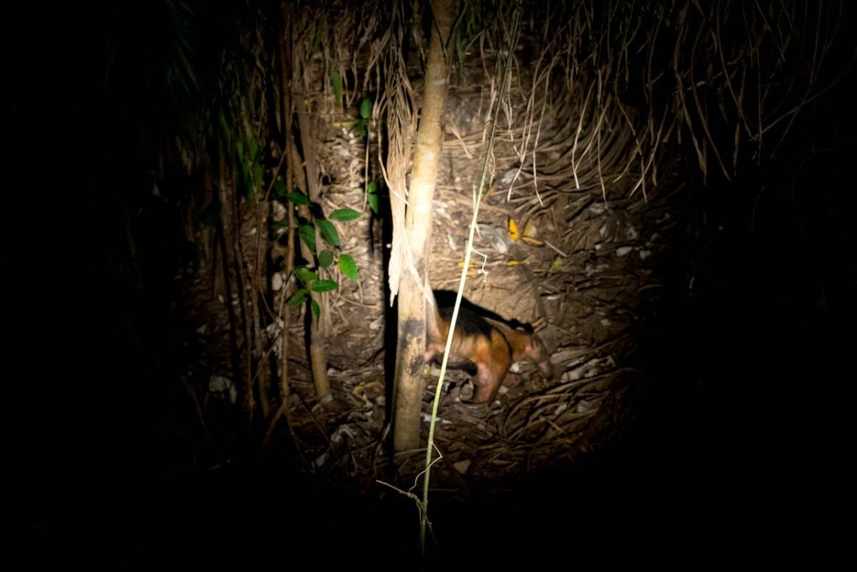 myresluger pantanal