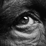 Sandro Miller, Bill Brandt / Eyes (1960-1964) (C), 2014
