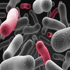 Płyn do soczewek kontaktowych usuwa bakterie