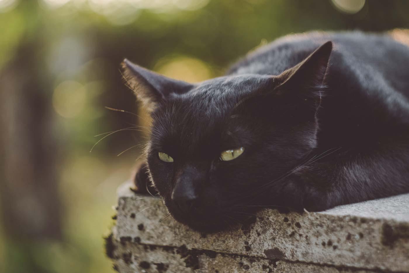 Ciekawostki o kotach. Głaskanie zwierząt to sprawdzone sposoby na relaks