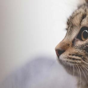 Najlepsze ciekawostki o kotach