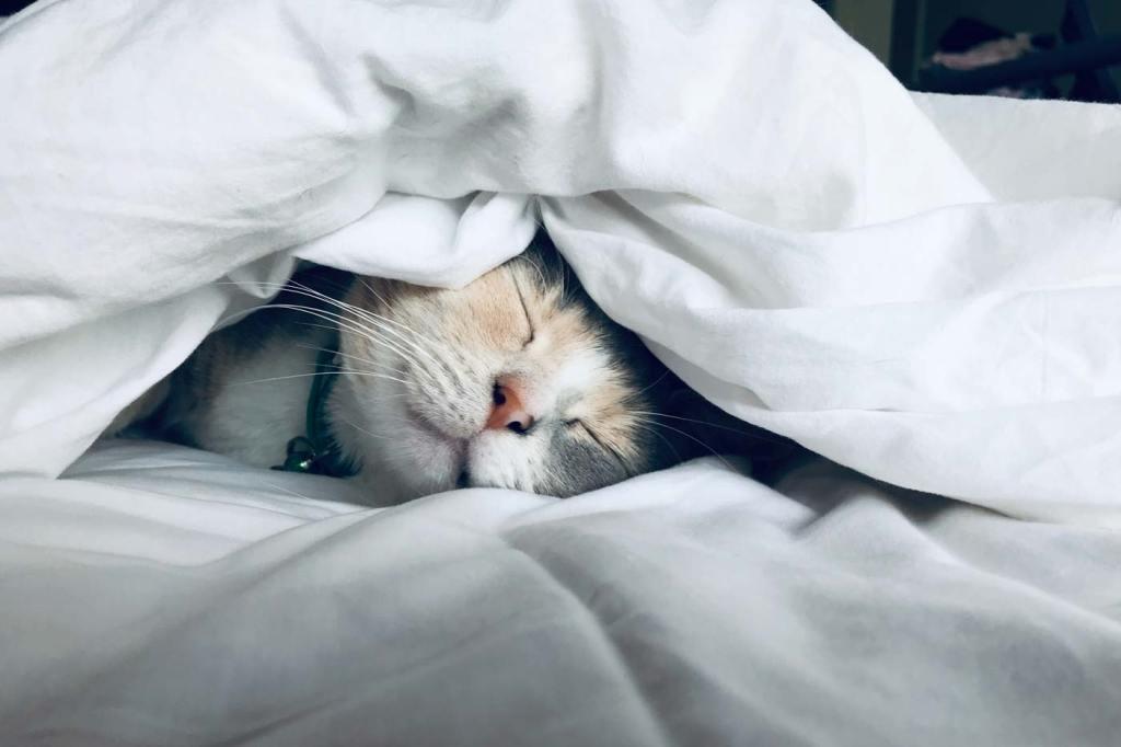 Przebywanie z kotami może wzmocnić naszą odporność