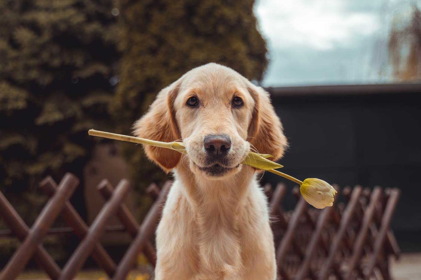 Czy warto mieć psa? Jak najbardziej. Pies to oddany przyjaciel człowieka.