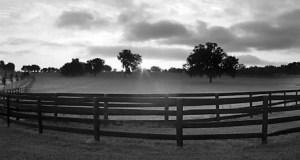 Florida Horse Farms