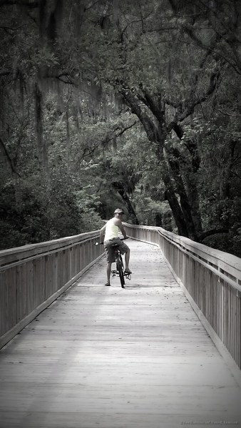 Miles of bike trails and multi purpose paths with boardwalks go between Lithia Springs Park and Fishhawk Preserve in Hillsborough County.