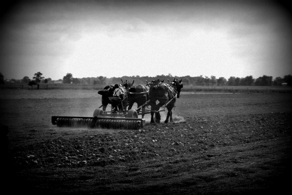 Goshen Indiana Amish Country