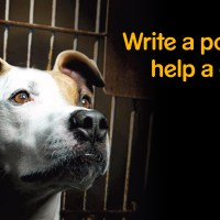 Write a Post Help a Dog Campaign 2011
