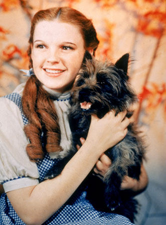 Toto the Cairn Terrier with Dorothy