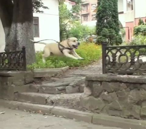 Parkour Dog TreT