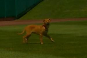 Isotopes new Mascot Blind Dog