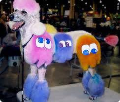 superzoo poodle