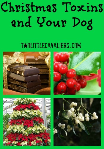 Christmas toxins and your dog