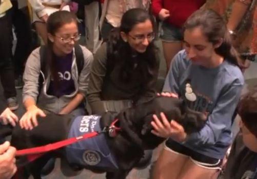 Dogs visit  Rice University