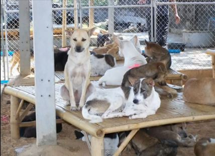 What happens to Dogs Saved from the dog meat trade