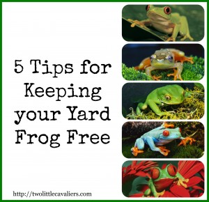 how to keep frogs away naturally