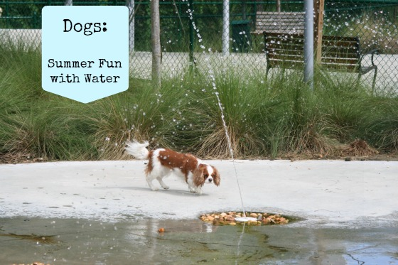Dogs Summer Fun with Water - tons of fun dog videos