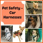 Pet Safety – Car Harnesses Awareness / Pet Bloggers Blog Hop