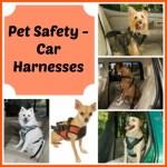 Pet Safety – Car Harnesses Awareness / Pet Bloggers Blog Hop