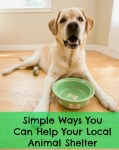 Simple and Inexpensive Ways you Can Help Your Local Animal Shelter