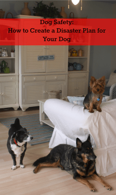 Dog Safety How to Create a Disaster Plan for Your Dog