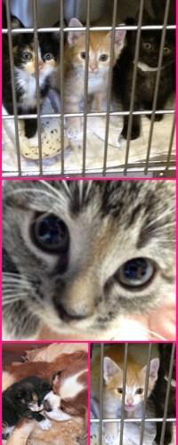 Foster Kittens Animal Shelter