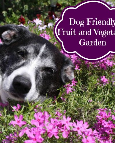 Dog Friendly Fruit and Vegetable Garden