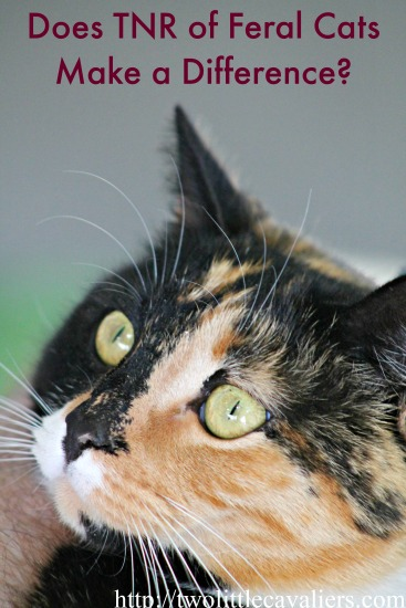 Does TNR of Feral Cats Make a Difference