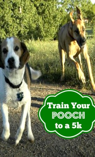 Train Your Dog To Run with You