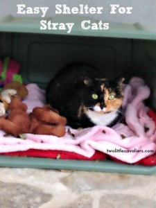 Caring For Stray Cats - Easy Shelter For Stray Cats ‪#‎BlogPawsDIY‬