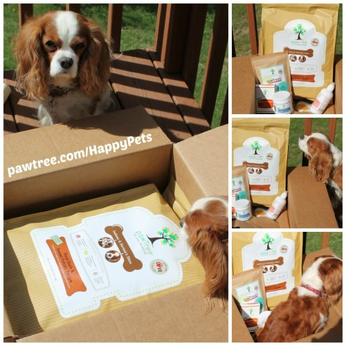 Customized Dog Food Provides the Nutrition Your Dog Needs