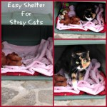 Caring For Stray Cats – Easy Shelter For Stray Cats  ‪#‎BlogPawsDIY‬
