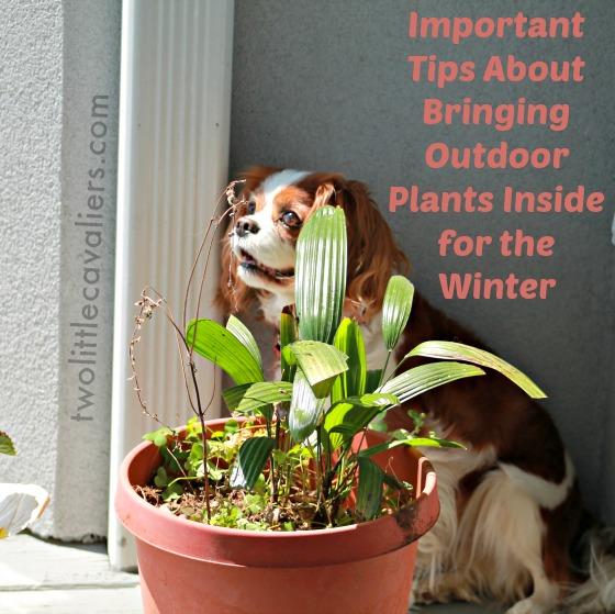 5 Dog Safe Houseplants