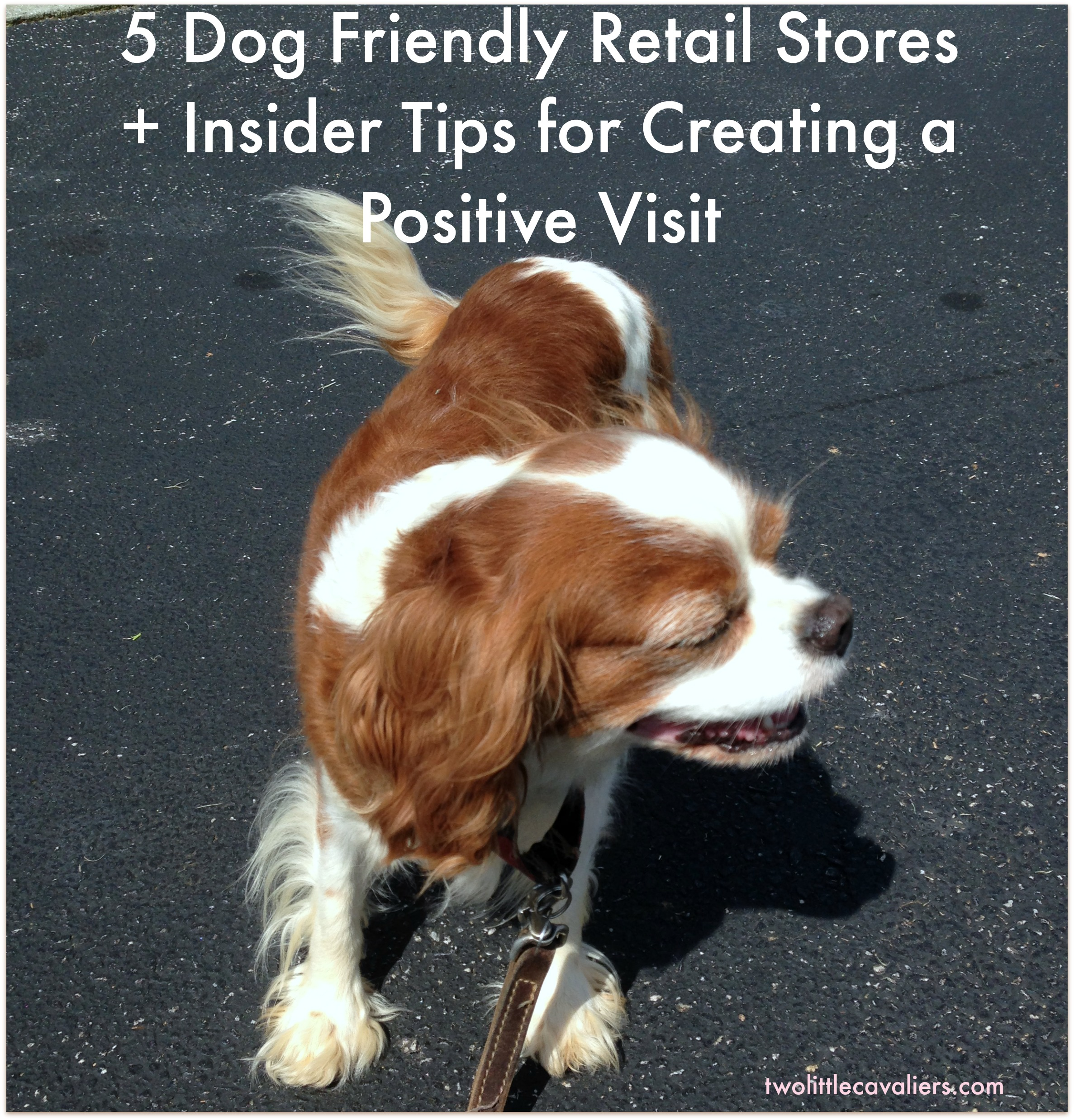 5 Dog Friendly Retail Stores