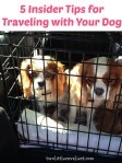 5 Insider Tips for Traveling with Your Dog