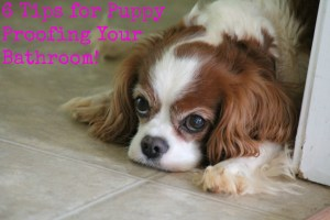 6 tips for puppy proofing your bathroom