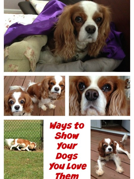 Ways to Show Your Dogs You Love Them