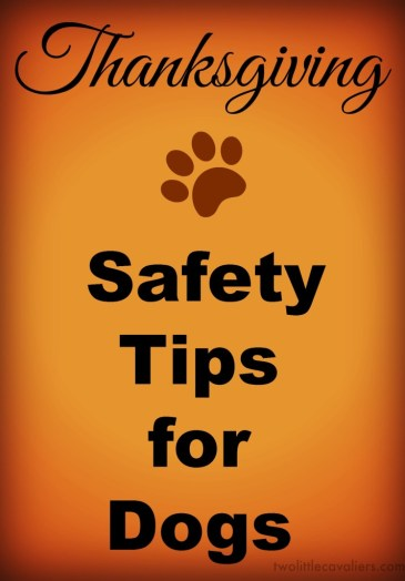 6 Thanksgiving Safety Tips for Dog https://twolittlecavaliers.com