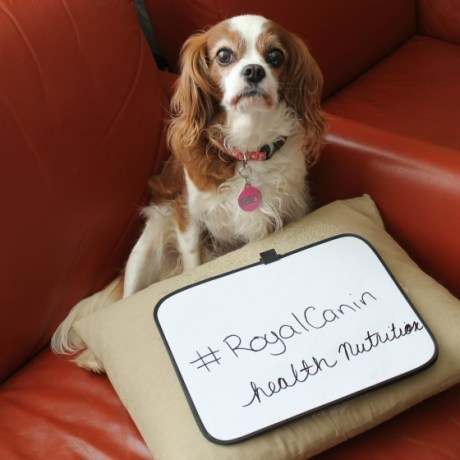 #RoyalCanin Health Nutrition