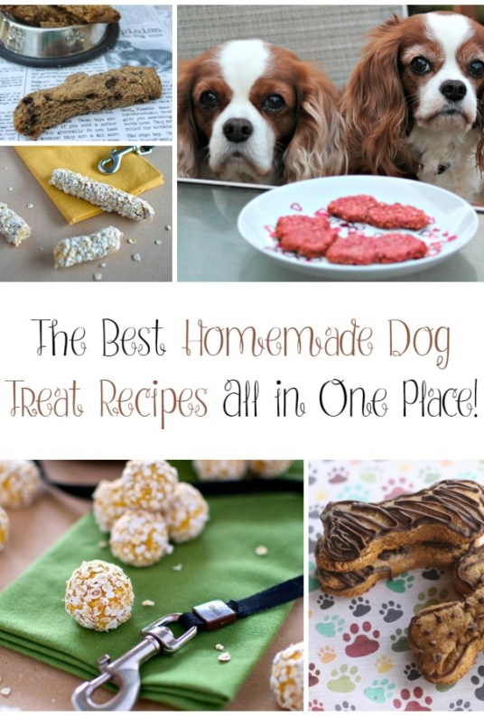 The Best Homemade Dog Treats All In One Place