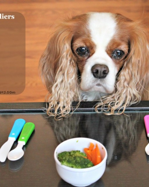 Keeping Cavaliers Healthy