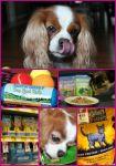 Natural Balance Offers A Huge Selection #PetSmartStory