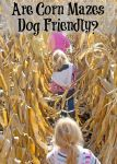 Are Corn Mazes Dog Friendly?