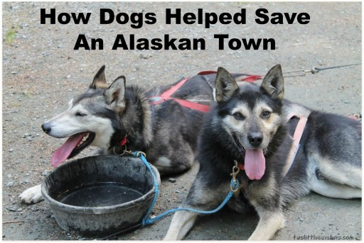 How Dogs Helped Save An Alaskan Town #BetterWithPets