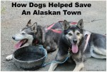 Dogs Helped Save Alaskan Town #BetterWithPets